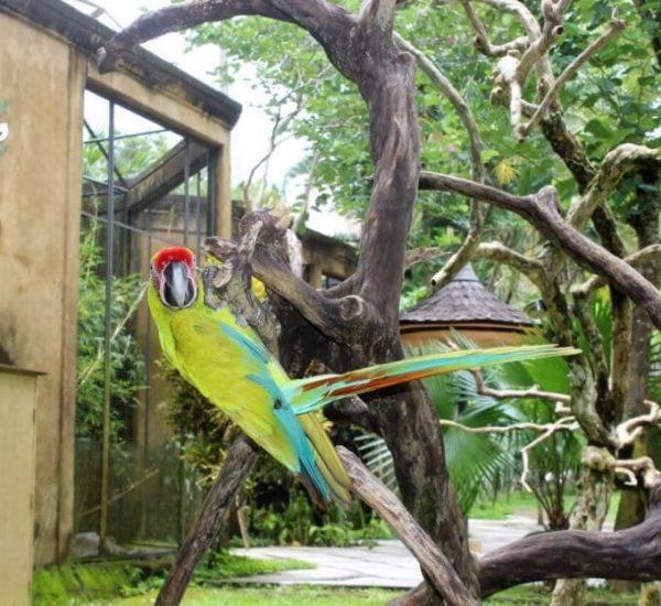 Bali-Bird-Park-Bl