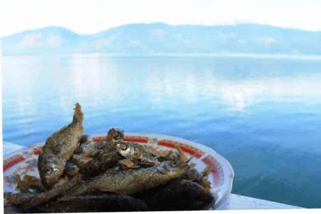 Danau Singkarak Makan