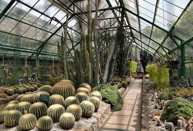 Gede Pangrango Kaktus