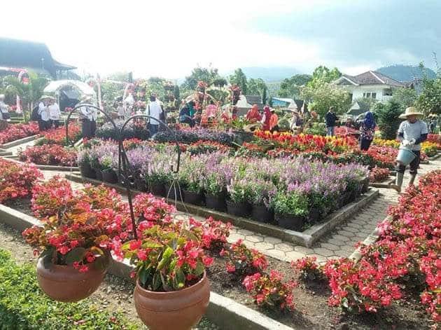 Kebun-Begonia-Merah