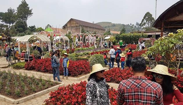 Kebun-Begonia-Ramai