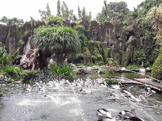 Kebun Binatang Ragunan Manuk