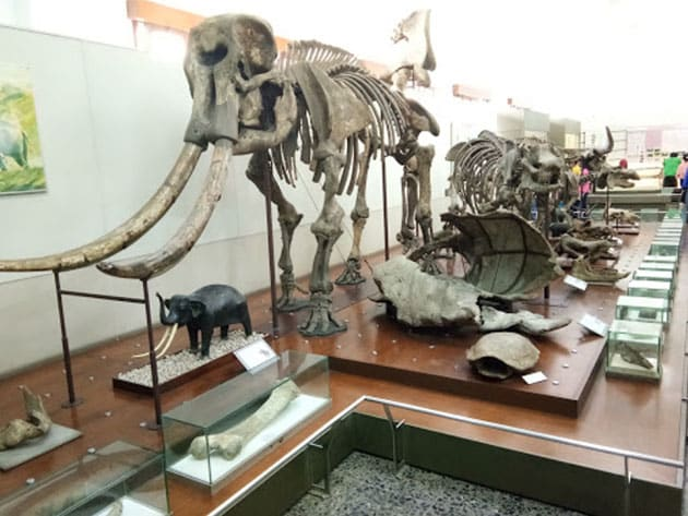 Museum Geologi Bandung Gajah