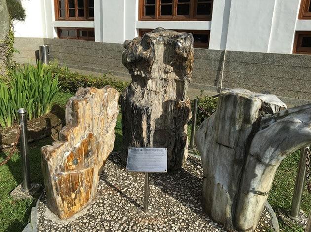 Museum Geologi Bandung Kayu