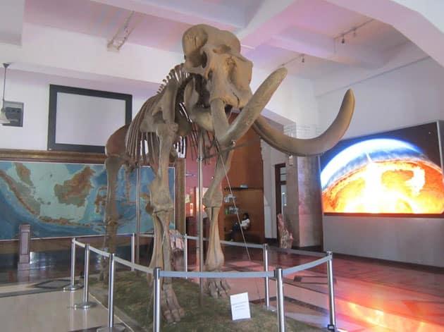 Museum Geologi Bandung Patung