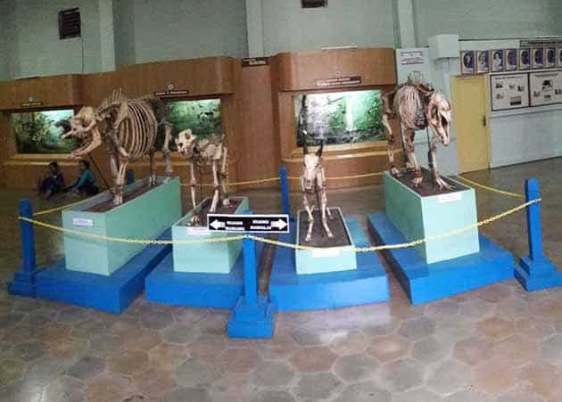 Museum Zoologi Dino