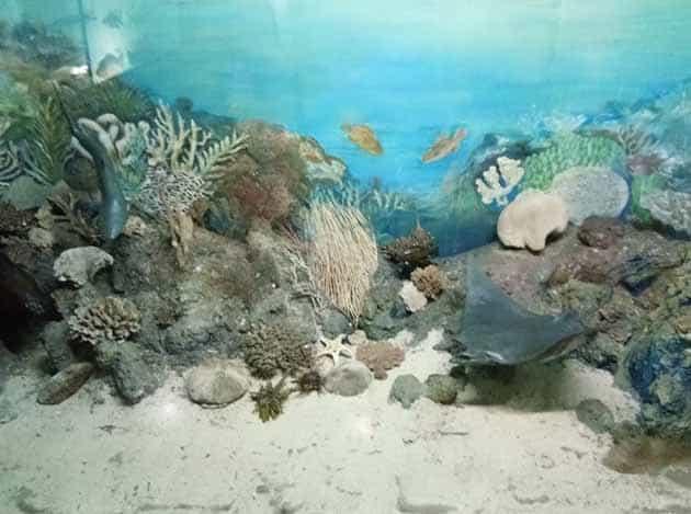 Museum Zoologi Min