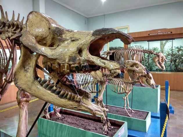 Museum Zoologi Purba