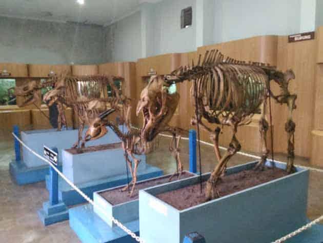 Museum Zoologi Sapi