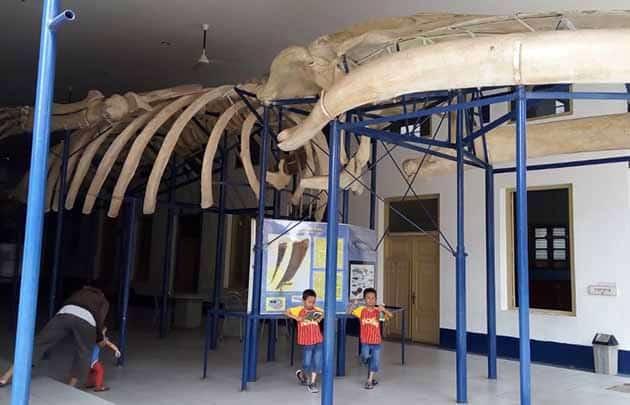 Museum Zoologi Tulang