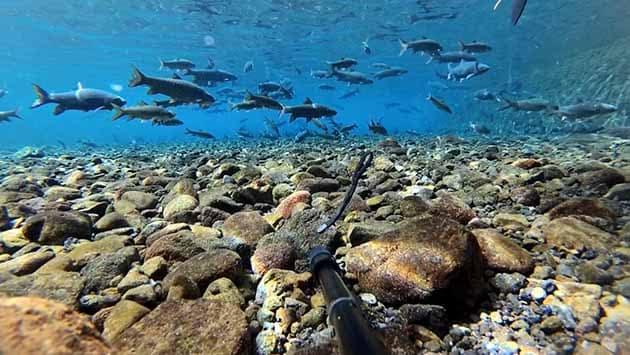 Pemandian Cibulan Kuningan Ikan