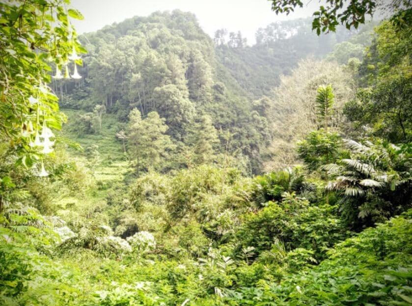 Taman-Hutan-Raya-Juanda-Hijau