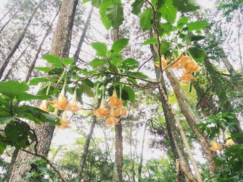 Taman-Hutan-Raya-Juanda-Kuning