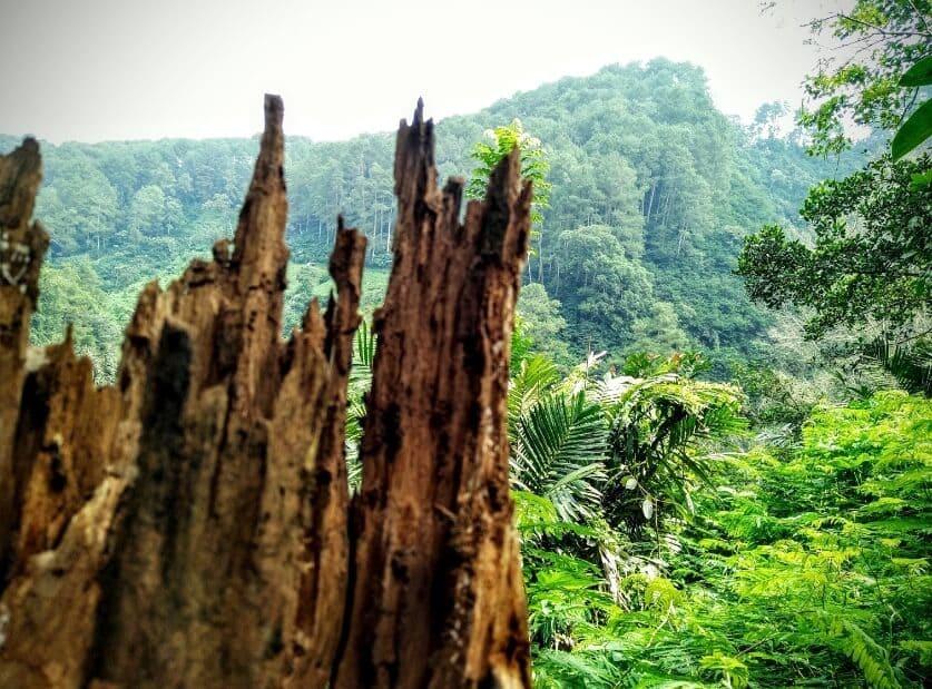 Taman-Hutan-Raya-Juanda-View