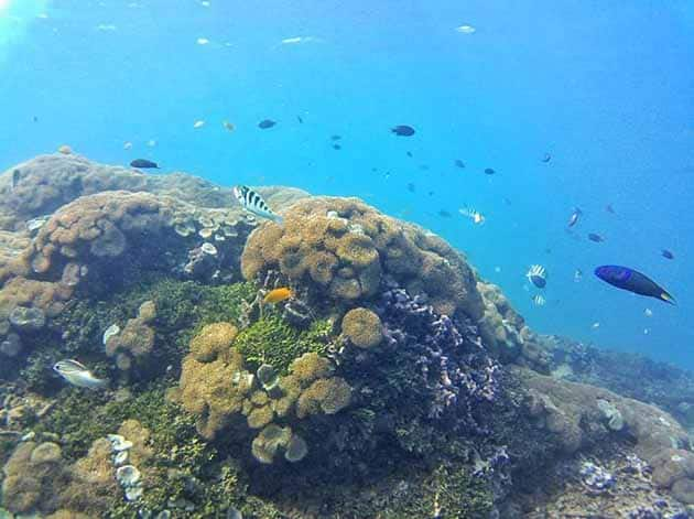 Teluk Kiluan Diving