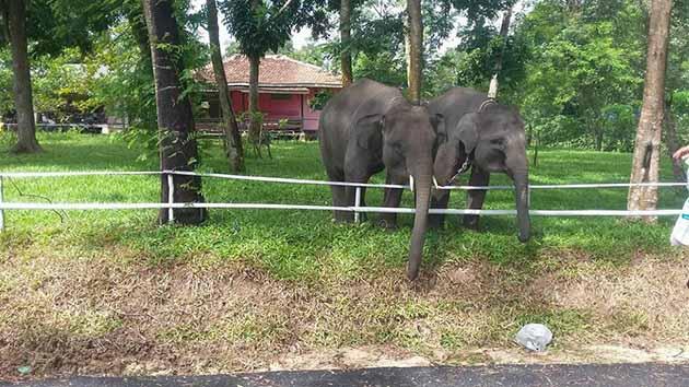 Way Kambas Gajah