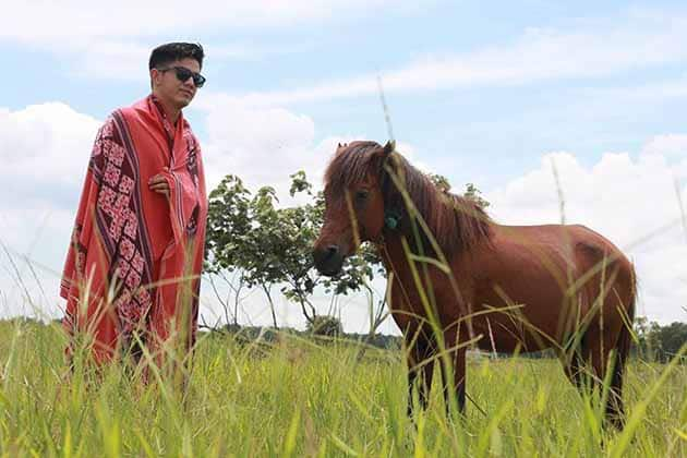 Way Kambas Kuda