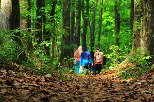 hutan sesaot lombok