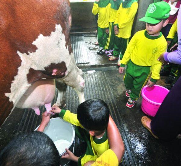 jk Cibubur Garden Dairy