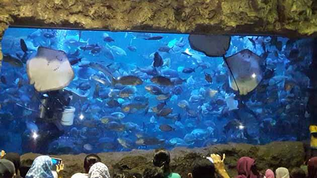 seaworld ancol you