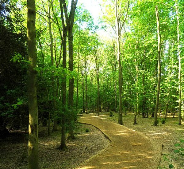 wp Hutan Kota Srengseng