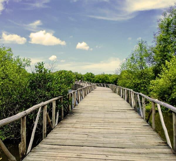 wp taman wisata alam mangrove angke kapuk