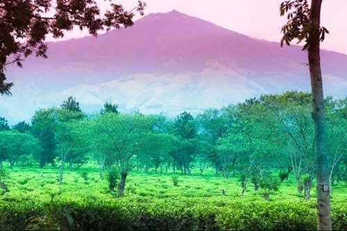 pemandangan agro teh wonosari