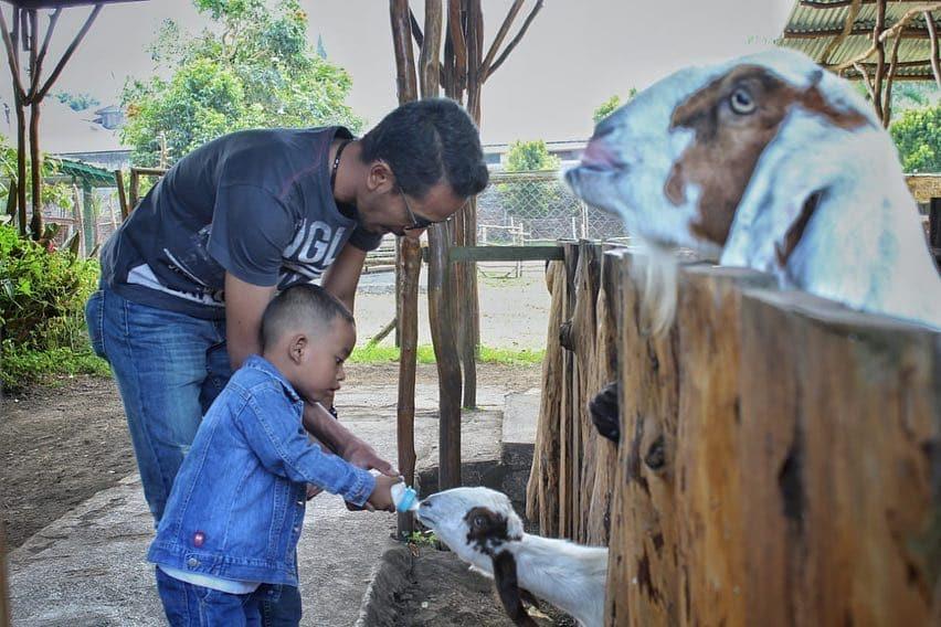 De'Ranch Lembang Taman Bermain Bertema Peternakan Ala Cowboy 4