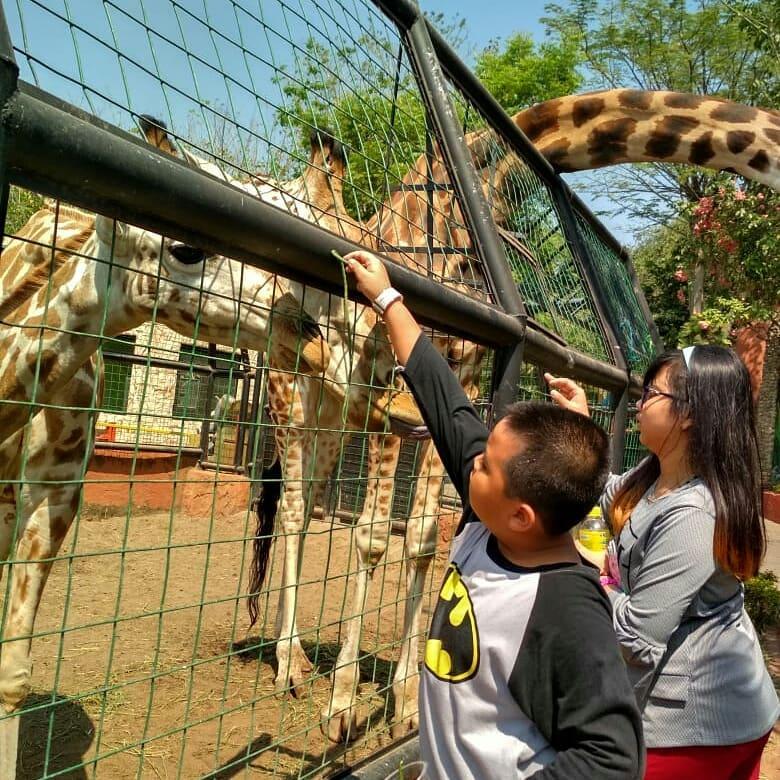 Maharani Zoo & Goa Lamongan 5