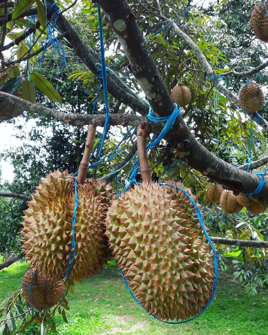 9 Tempat Wisata Keluarga dan Anak di Bogor 23