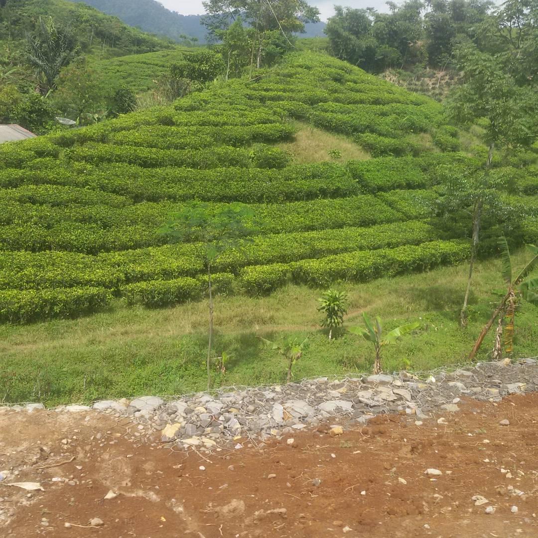 9 Tempat Wisata Keluarga dan Anak di Bogor 5