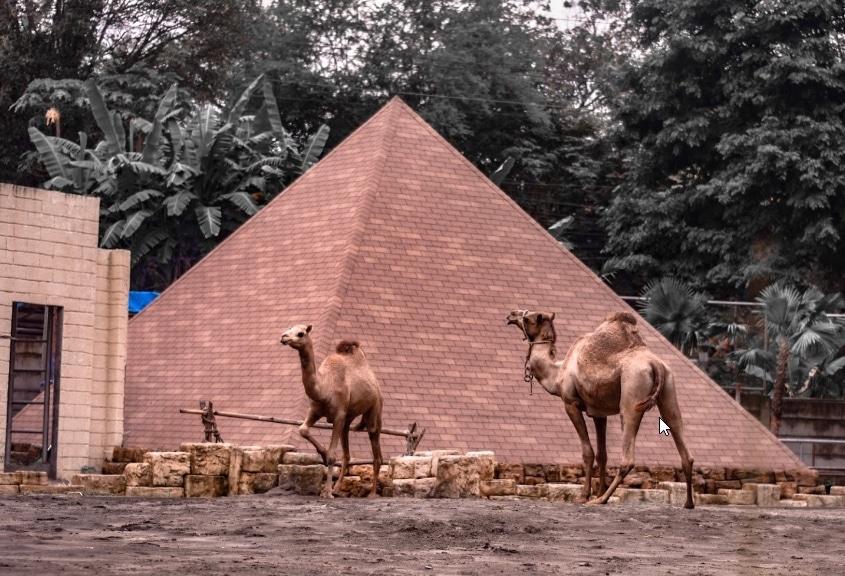 Gembira Loka Zoo Jogja 9