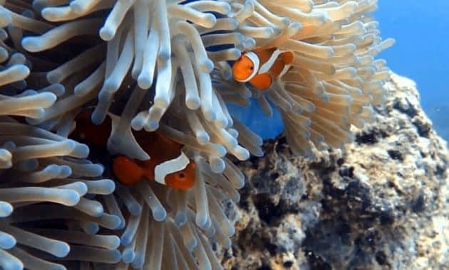 Gili Nanggu Lombok 5