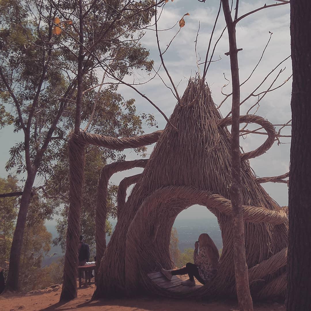 Hutan Pinus Pengger Omah