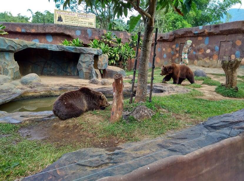 Jatim Park 2 Beruang