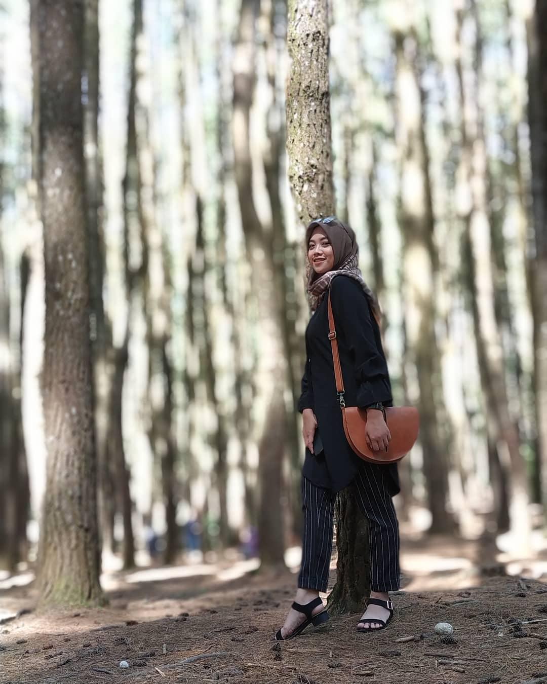 kebun buah mangunan hutan pinus