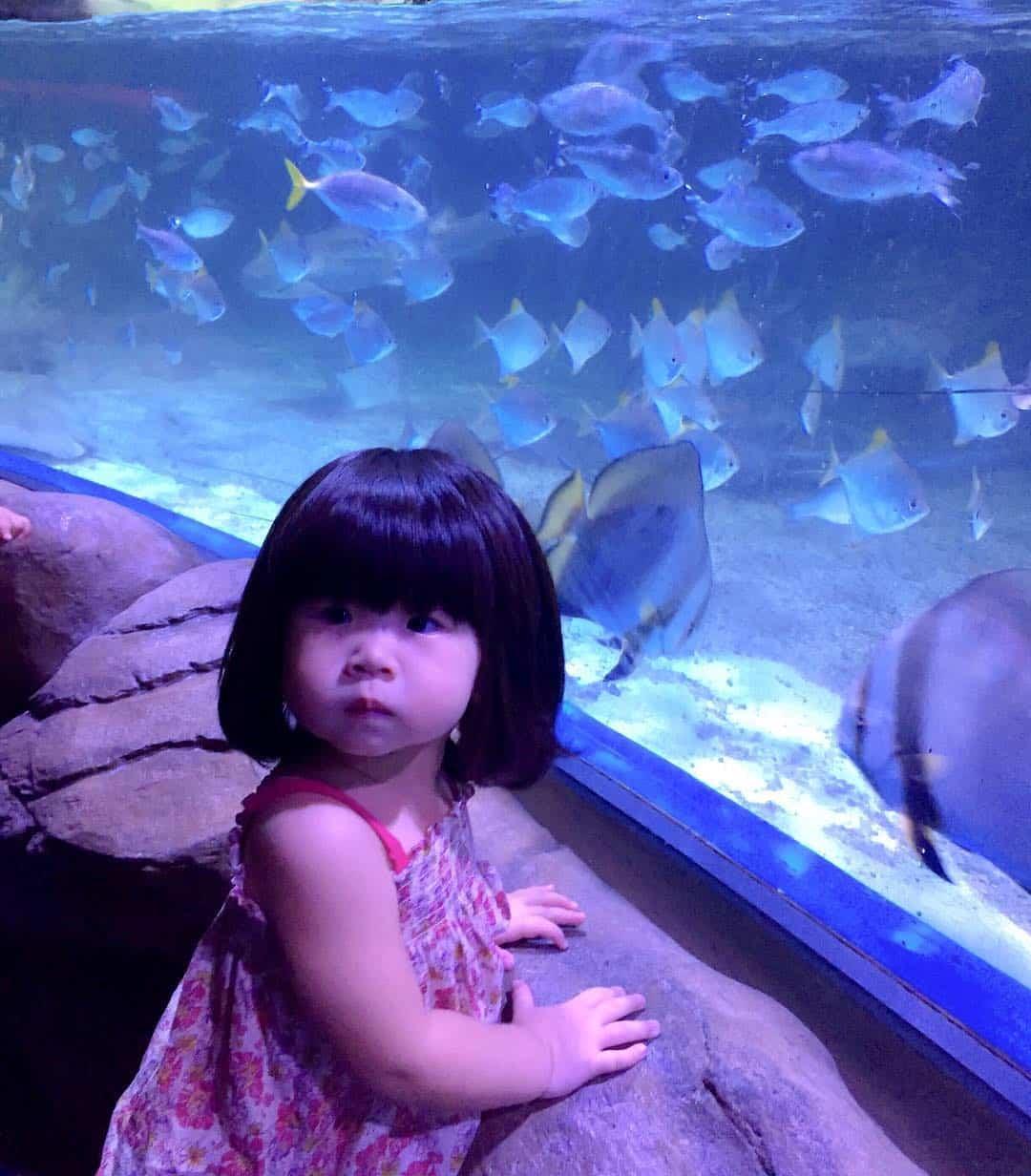 jakarta aquarium anak cewek