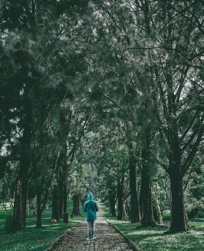 Kebun Raya Cibodas Hutan