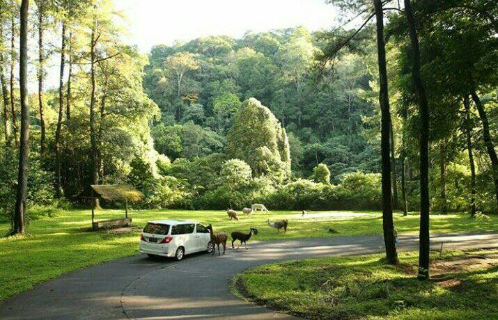Suasana Taman Safari Prigen