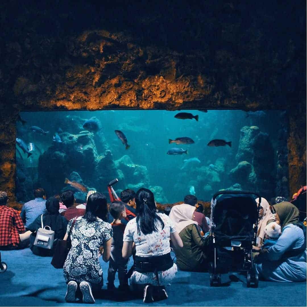 main-akuarium-seaworld-ancol