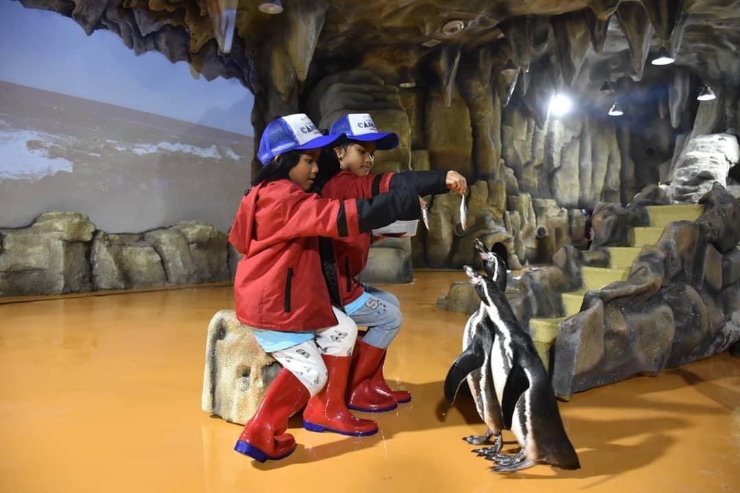 ocean-dream-memberi-makan-pinguin