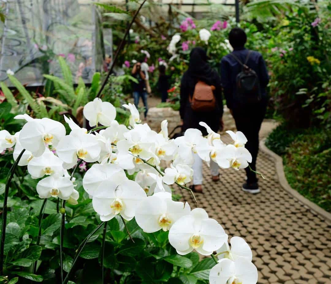 anggrek orchid forest cikole