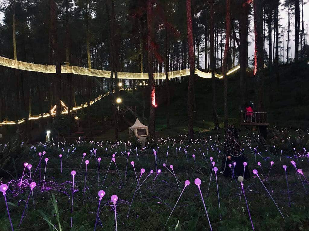 malam orchid forest cikole