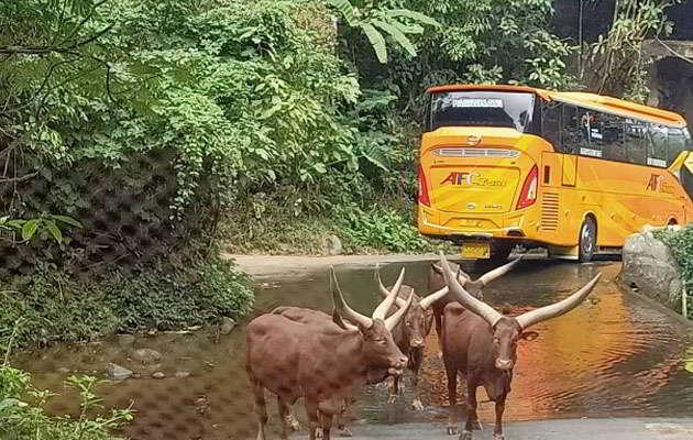 promo-taman-safari-bogor