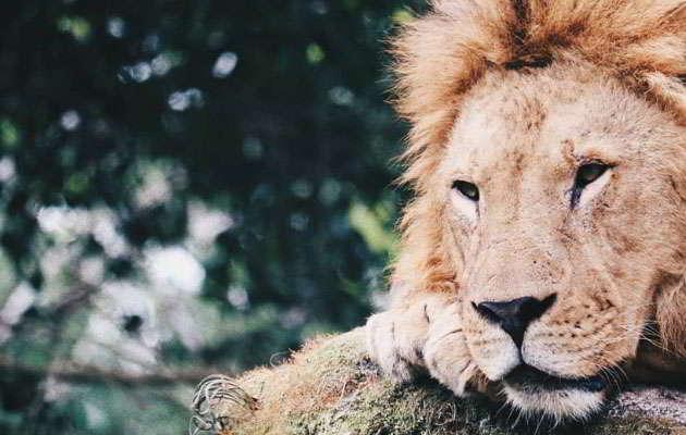 taman-safari-indonesia-bogor