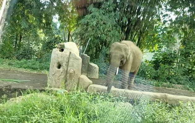 taman-safari-indonesia-gajah