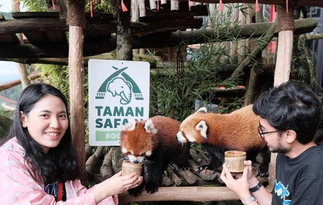 taman-safari-indonesia-safari-journey