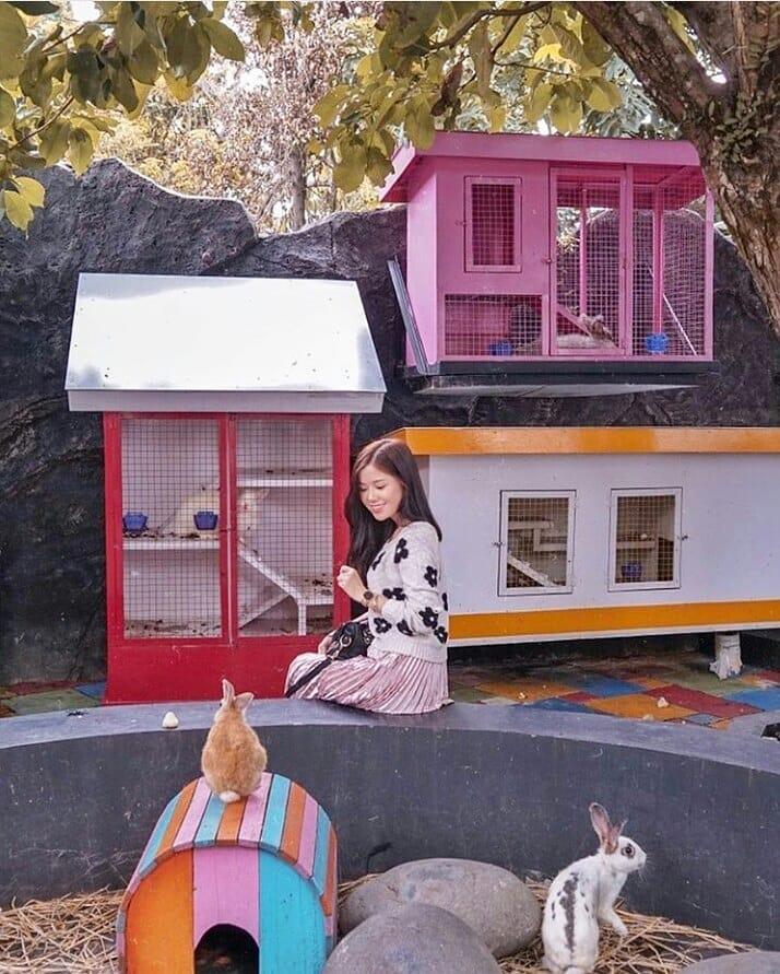 Spot Fauna Rabbit Town