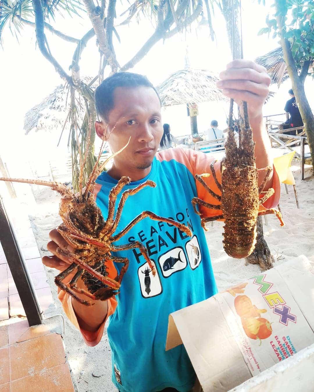 Lobster pantai Indrayanti