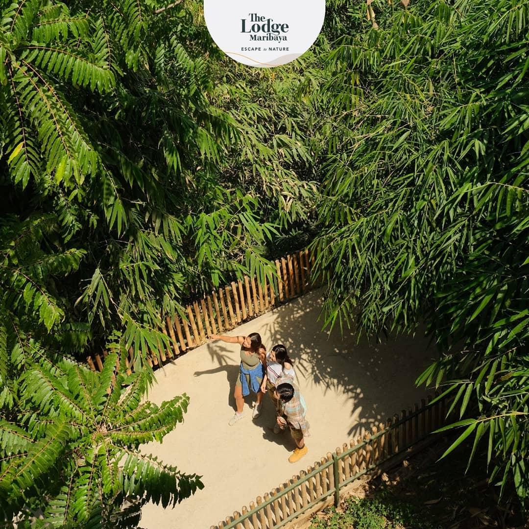 The Lodge Maribaya Spot Foto Unik, Seru Dan Menantang 6
